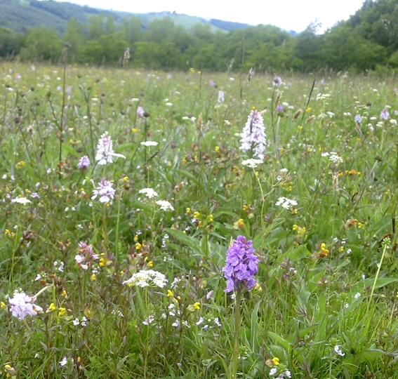 Events and Meadow Visits (6/6)