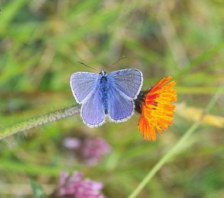 l-common-blue-b-male (2)