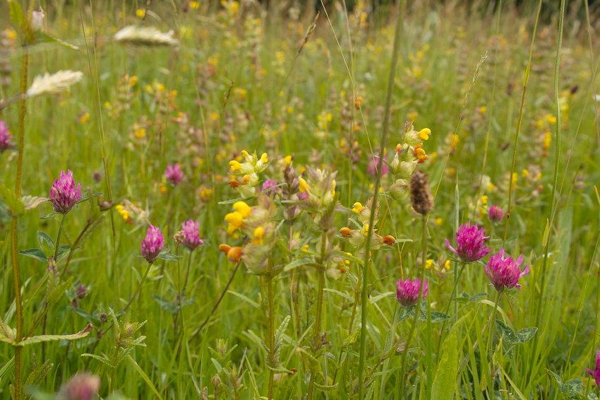Meadowing (6/6)