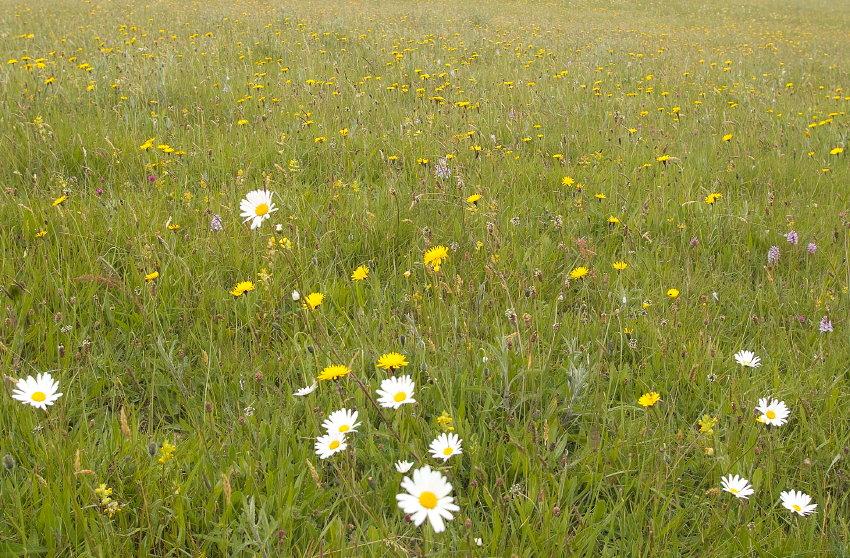 Meadowing (2/6)