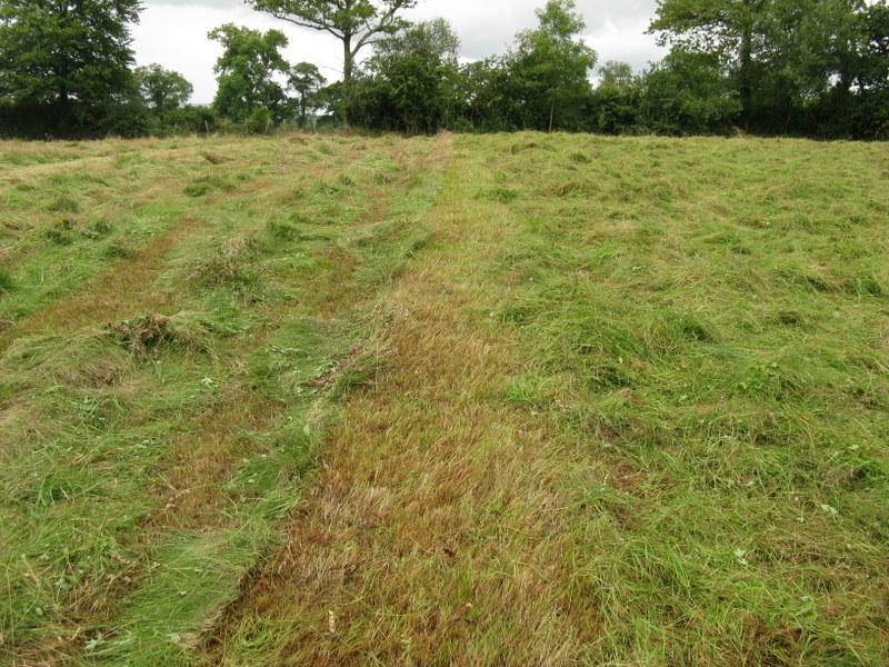 DIY Meadow Management - Hay Making at Ffos y Broga, 2015 (5/6)
