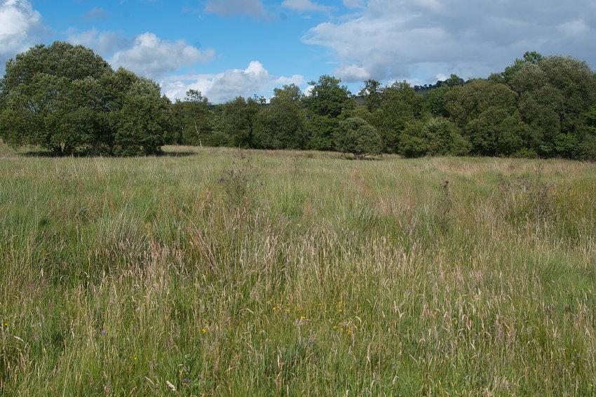 Meadow Diversity (5/6)