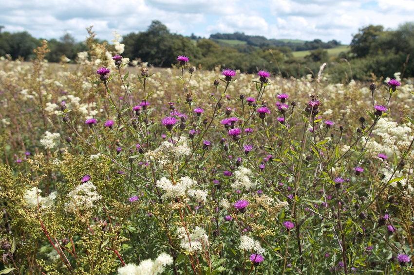 Meadow Diversity (4/6)