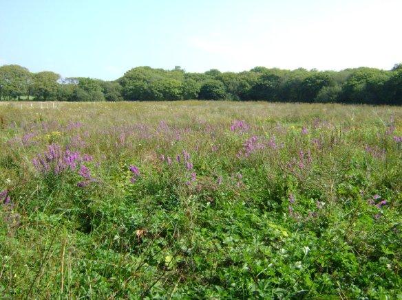 grmpyhobbit2wet meadow (3)