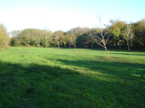 grumpyhobbitglamping field (2)