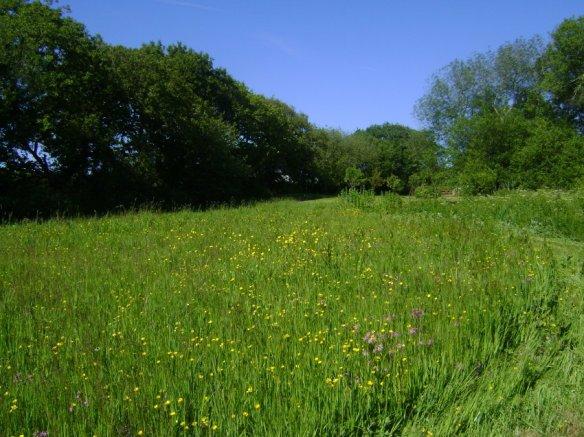 grumpyhobbitlog cabin field (2)
