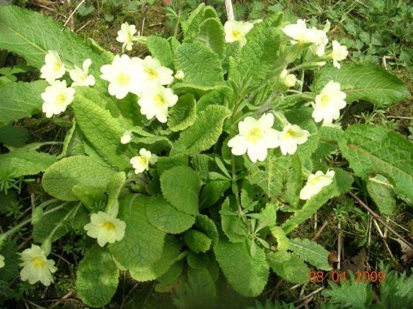Maes yr Haul Flowers013 (2)