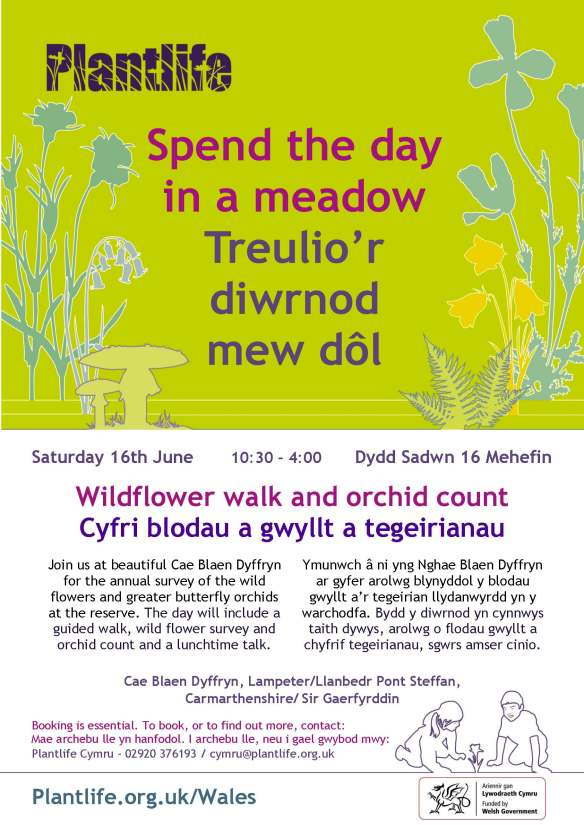 Wild Flower Count 18 Poster