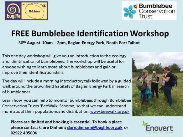 Bumblebee ID workshop (1)