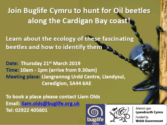 Oil beetle flyer_Ceredigion (1)