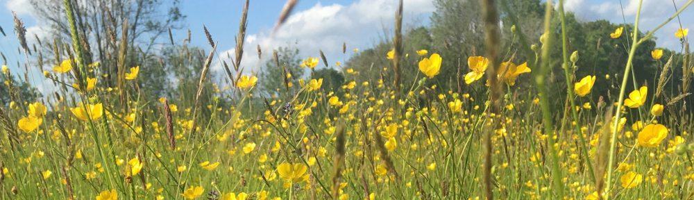 Carmarthenshire Meadows Group – Grŵp Dolydd Sir Gaerfyrddin